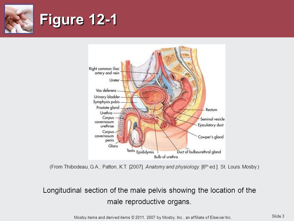 Charmant Neonatalen Atmungsorgane Anatomie Und Physiologie Ideen ...