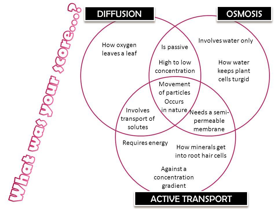 Venn Diagram Comparing Osmosis And Diffusion Selol Ink