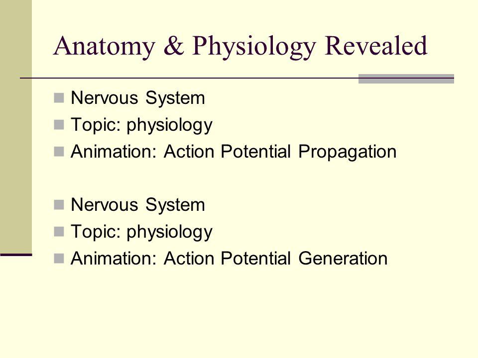 Schön Action Potential Anatomy And Physiology Bilder - Menschliche ...