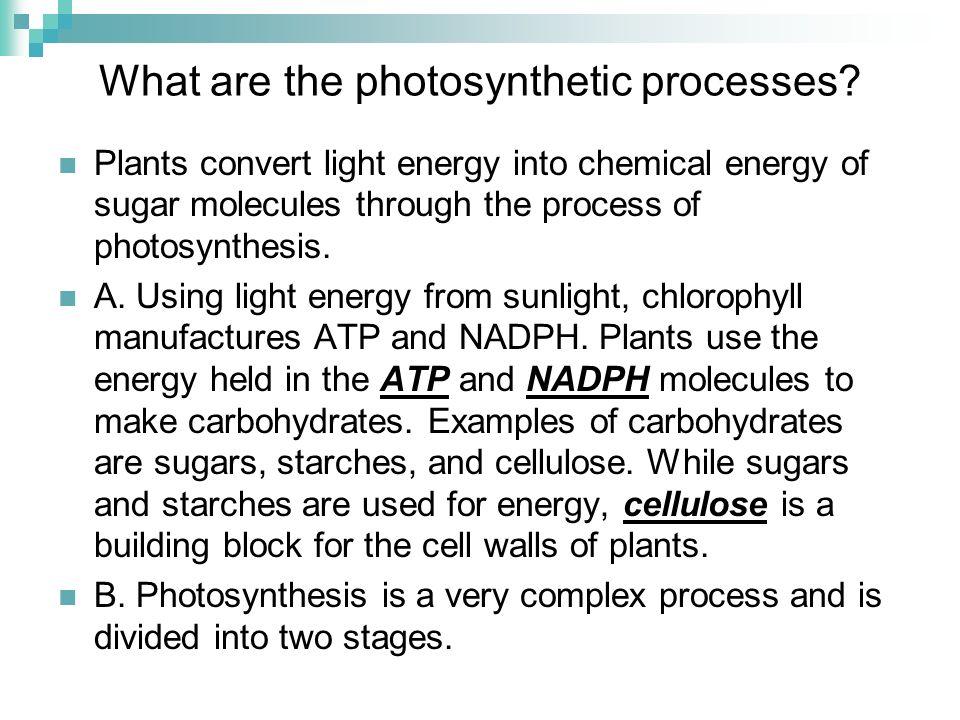 Unit Plant Science. Problem Area Managing Plant Growth. - ppt download