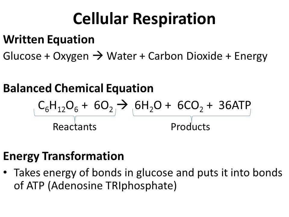 2 Cellular Respiration Written Equation ...