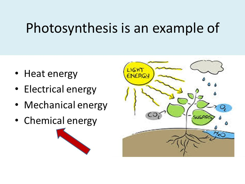 examples of photosynthesis