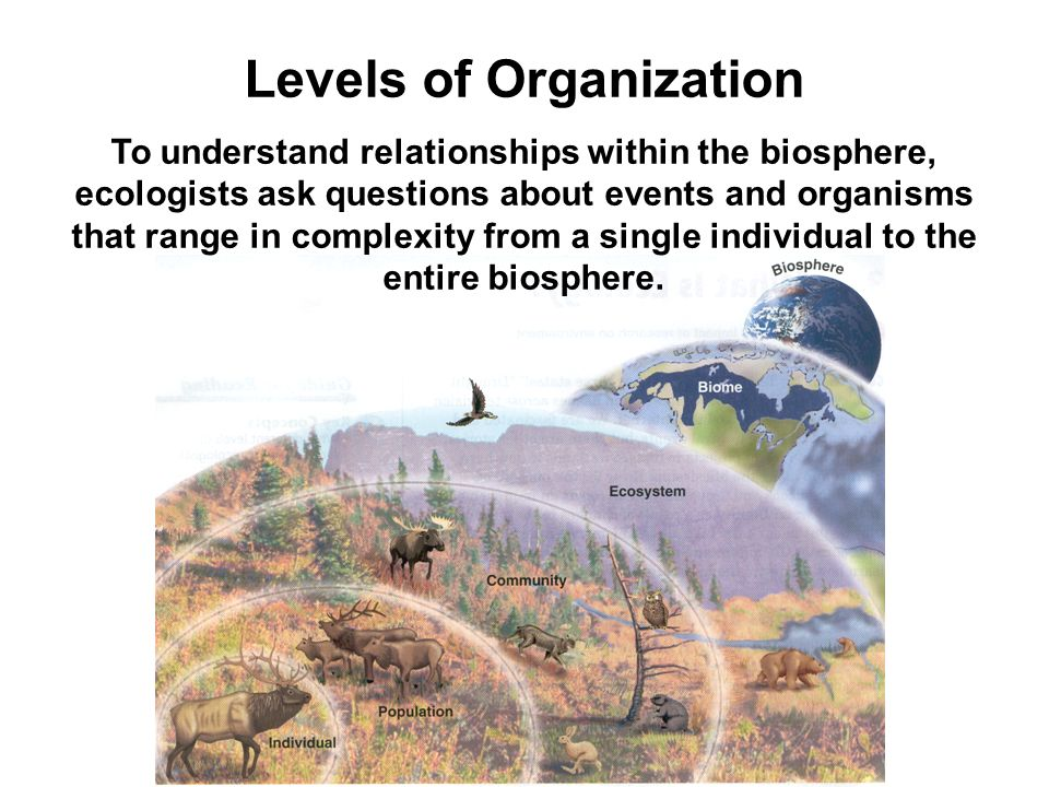 Levels of Organization To understand relationships within the biosphere, ecologists ask questions about events and organisms that range in complexity from a single individual to the entire biosphere.