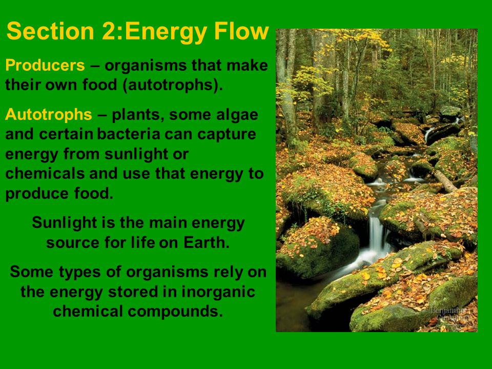 Section 2:Energy Flow Producers – organisms that make their own food (autotrophs).