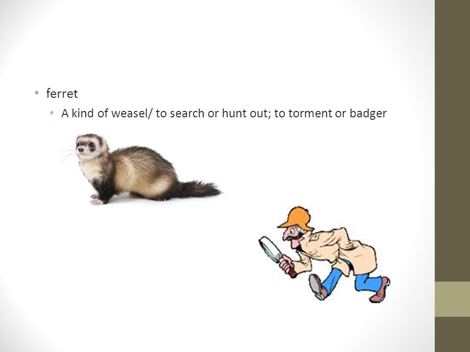 Vocabulary Week 10. ferret A kind of weasel/ to search or hunt out ...
