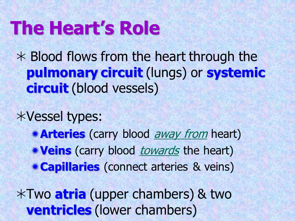 Chapter 12 The Cardiovascular System: The Heart. - ppt download