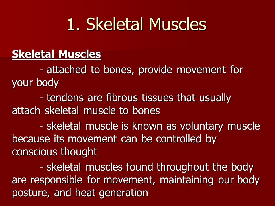 the muscular system key facts the ability to move is an essential, Muscles