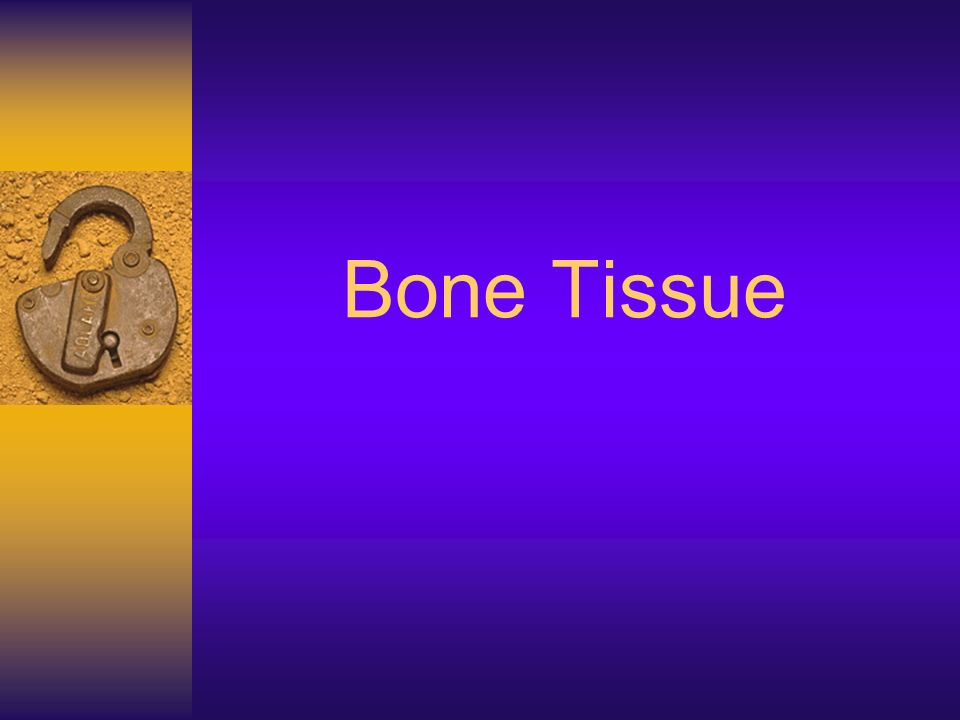 Bone Tissue. Quick Review for Quiz over Bone Tissue/Structure ...