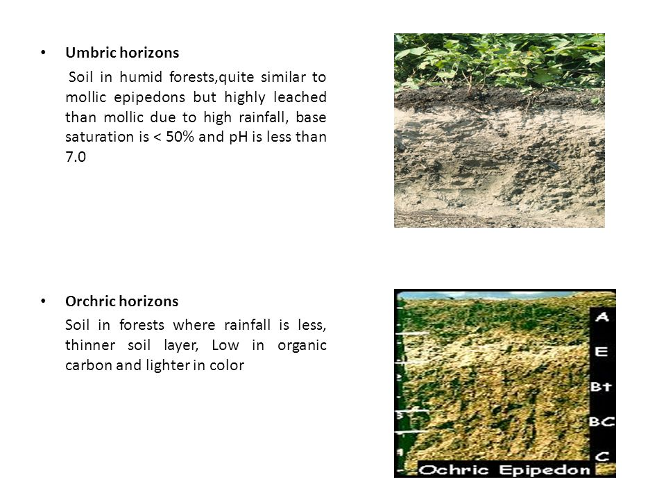 Umbric horizons Soil in humid forests,quite similar to mollic epipedons but highly leached than mollic due to high rainfall, base saturation is < 50% and pH is less than 7.0 Orchric horizons Soil in forests where rainfall is less, thinner soil layer, Low in organic carbon and lighter in color