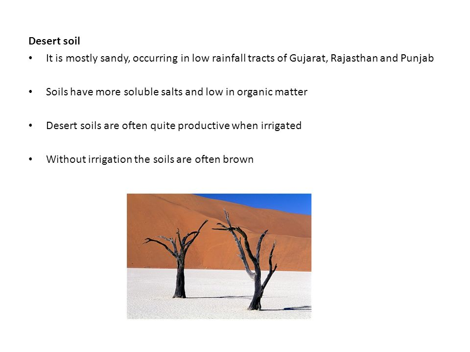 Desert soil It is mostly sandy, occurring in low rainfall tracts of Gujarat, Rajasthan and Punjab Soils have more soluble salts and low in organic matter Desert soils are often quite productive when irrigated Without irrigation the soils are often brown