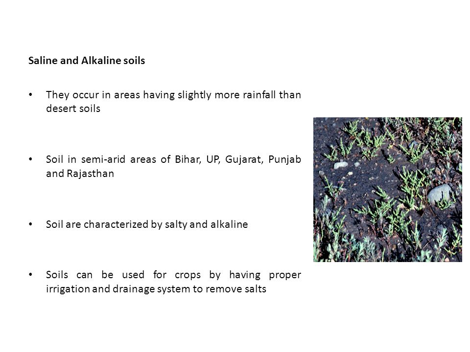 Saline and Alkaline soils They occur in areas having slightly more rainfall than desert soils Soil in semi-arid areas of Bihar, UP, Gujarat, Punjab and Rajasthan Soil are characterized by salty and alkaline Soils can be used for crops by having proper irrigation and drainage system to remove salts