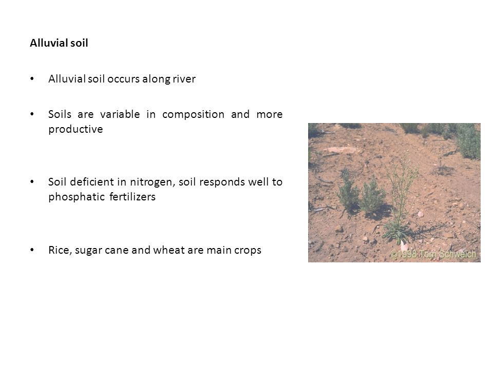 Alluvial soil Alluvial soil occurs along river Soils are variable in composition and more productive Soil deficient in nitrogen, soil responds well to phosphatic fertilizers Rice, sugar cane and wheat are main crops