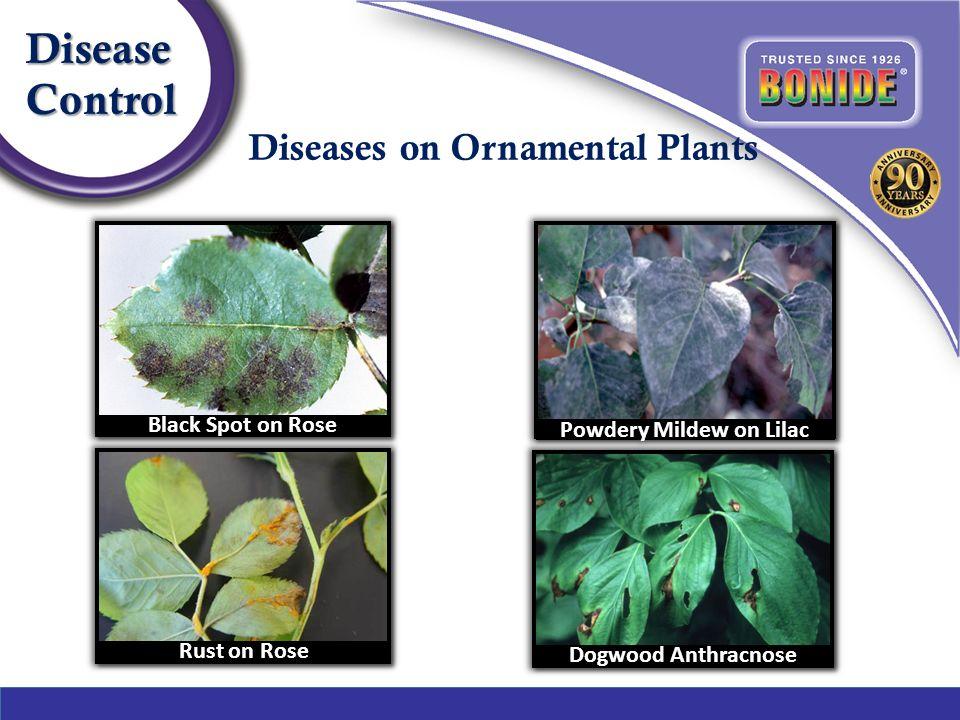 4 Diseases On Ornamental Plants Diseasecontrol
