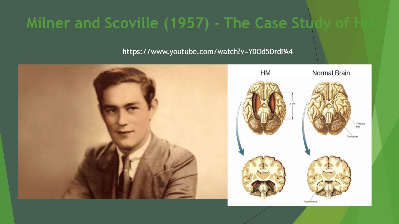 Hm Case Study Essay Examples Slide  Hm Case Study