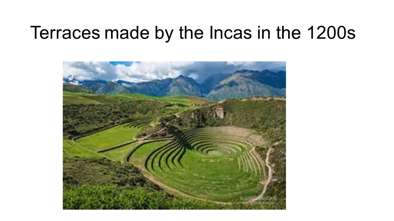 Terraces made by the Incas in the 1200s