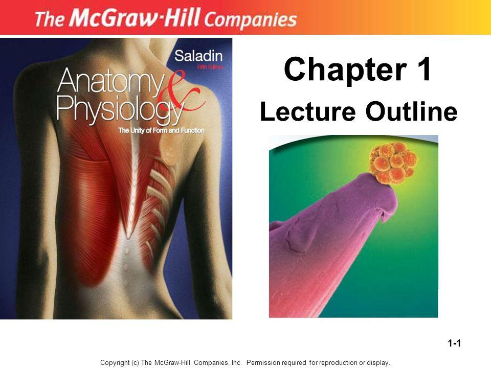 Schön Mcgraw Hill Anatomie Und Physiologie Saladin 6. Auflage ...