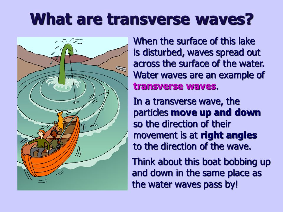 What Is An Example Of Transverse Waves Image Collections Example