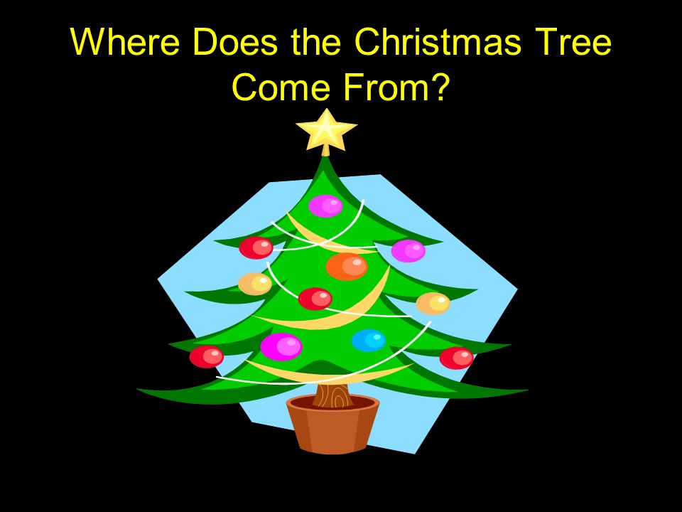 1 Where Does the Christmas Tree Come From? Where Does the Christmas ...