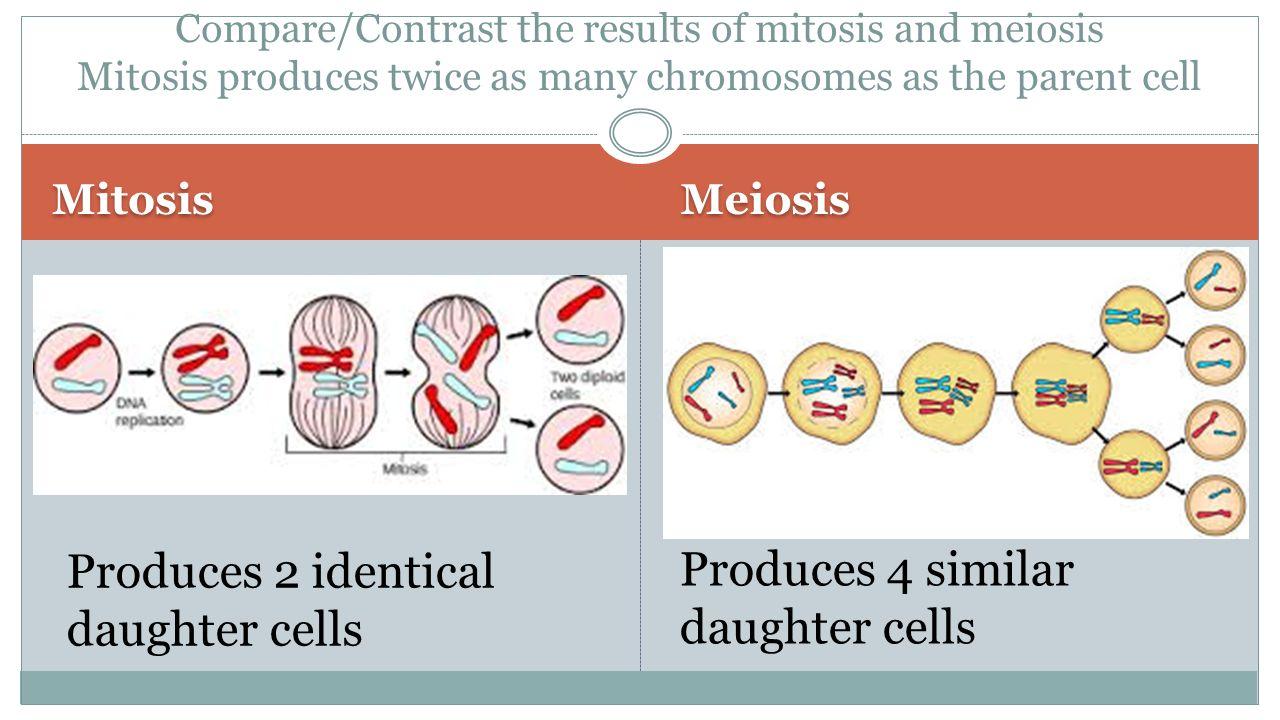 ap bio lab 7 cell division