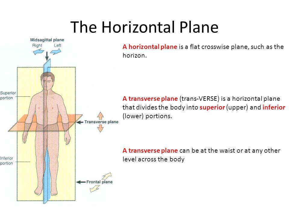 Horizontal Plane Anatomy Image Collections Human Body Anatomy