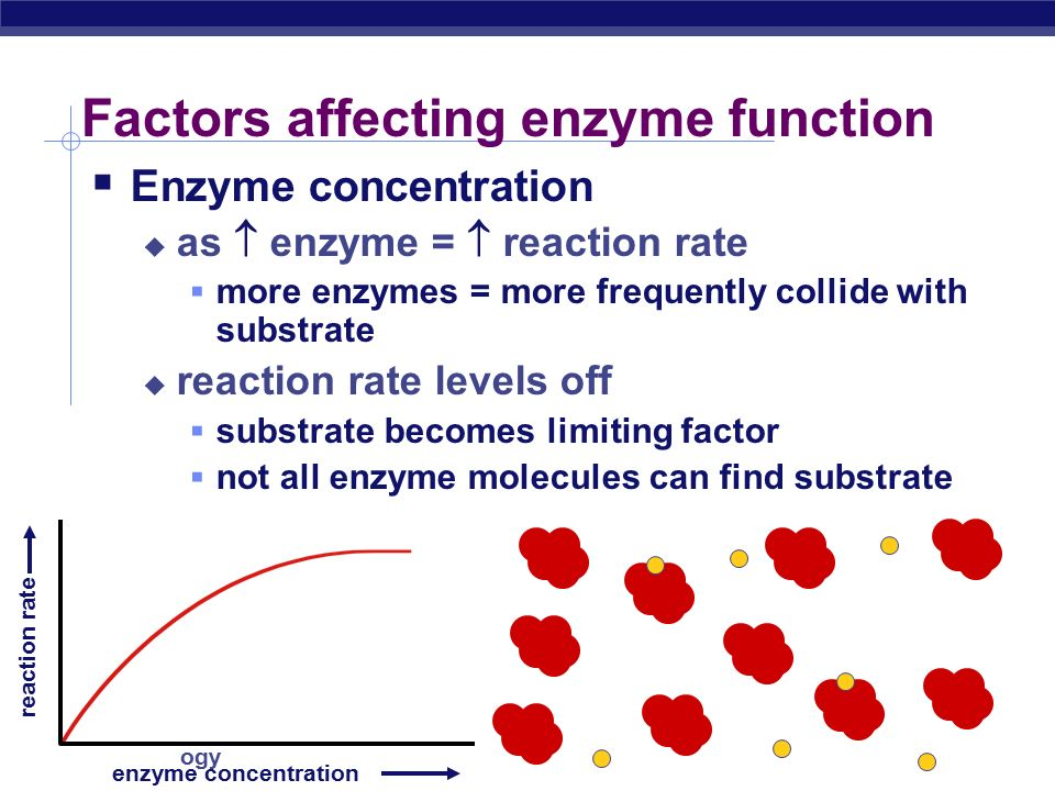 Regents Biology Enzyme concentration enzyme concentration reaction rate What's happening here !