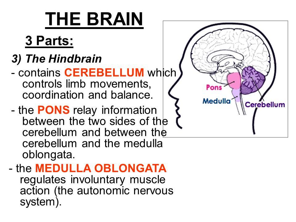 Chapter     Nervous System CLICK HERE  Autonomic nervous system case study bad fish
