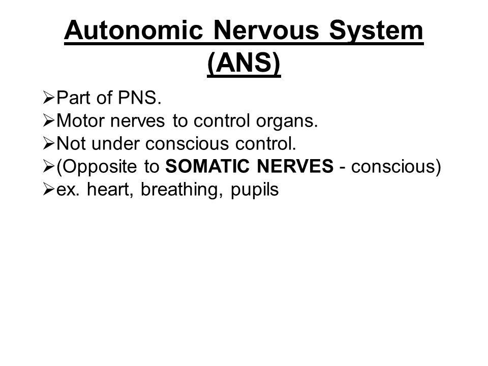 Case studies by Miranda Hutton on Prezi Autonomic Nervous System