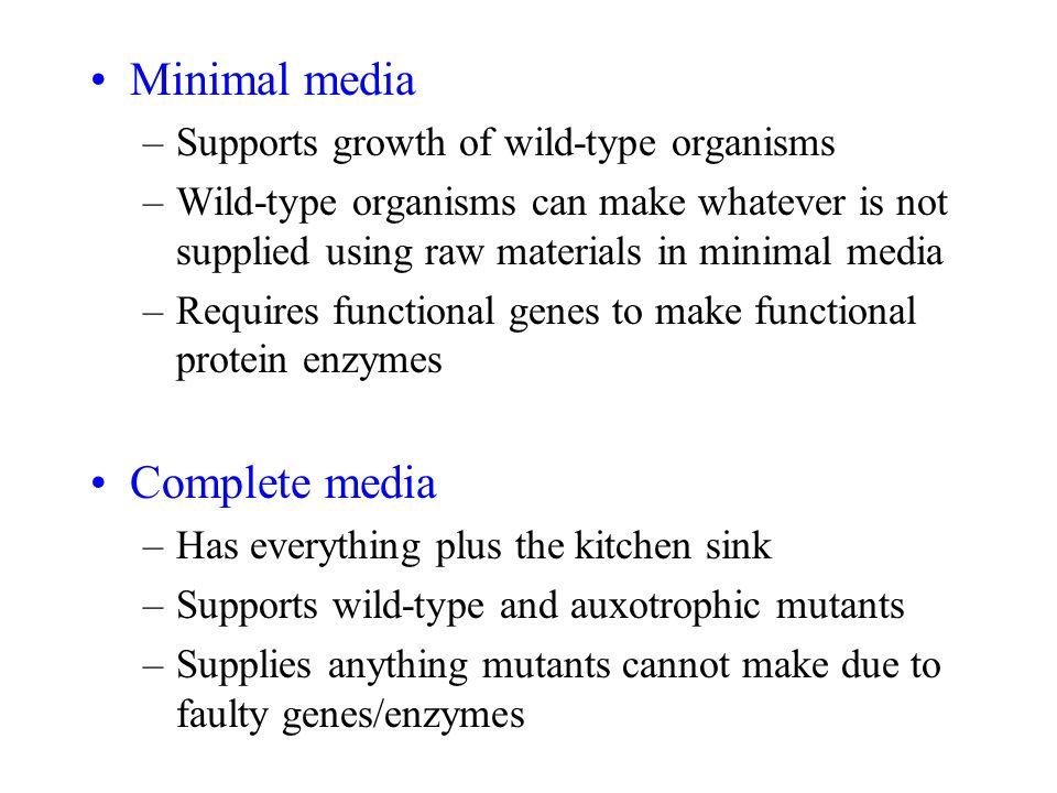 minimal organism