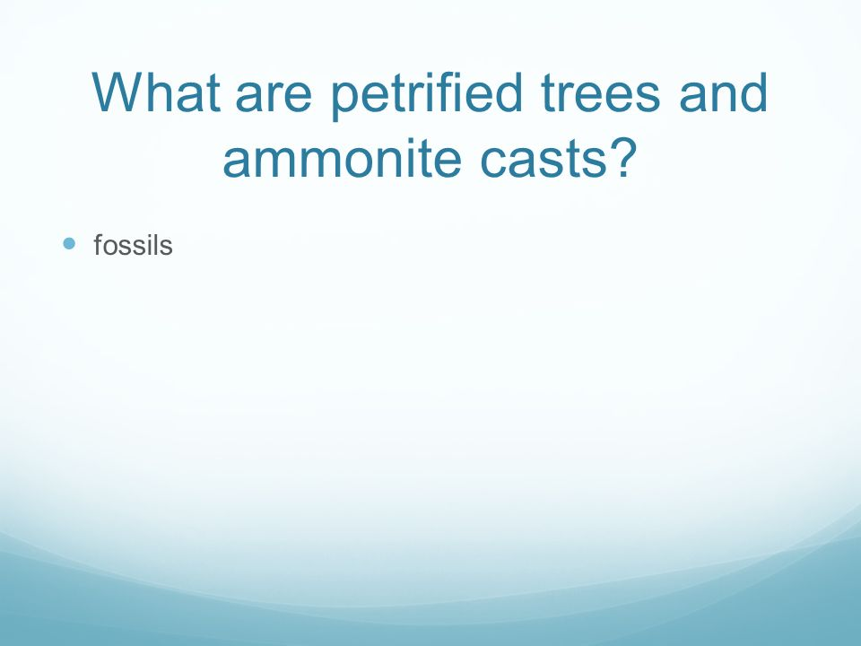 What are petrified trees and ammonite casts fossils