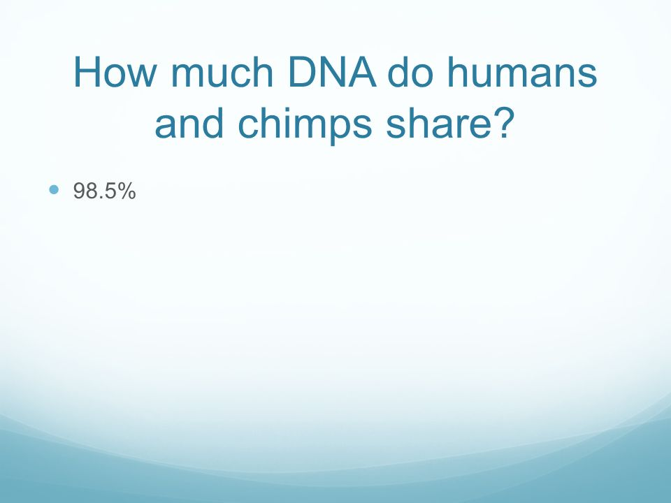 How much DNA do humans and chimps share 98.5%