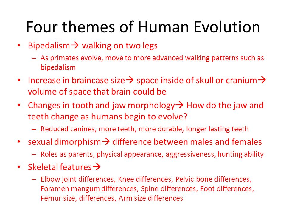 bipedalism essay Evolution: human and skull shape bipedalism essay some ideas to consider why is there a difference between the maxillary (jaw) angle, teeth, and.