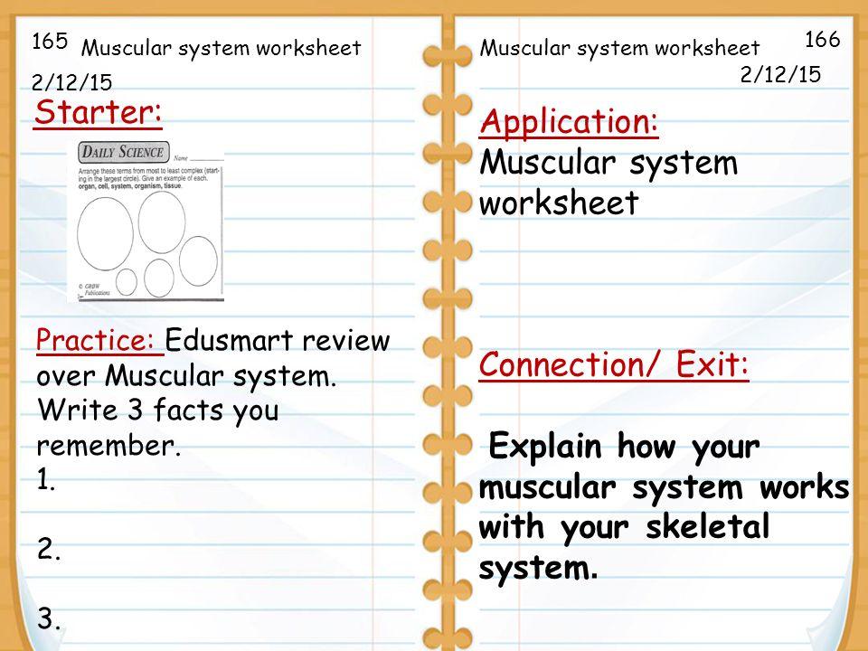21215 Starter 212 Application Muscular system worksheet – Skeletal System Worksheet