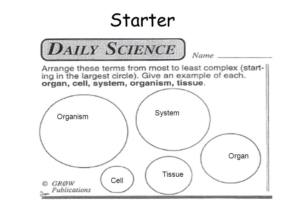 Human Body Organ Systems - Worksheets for Grade 3 and 4 | Human ...