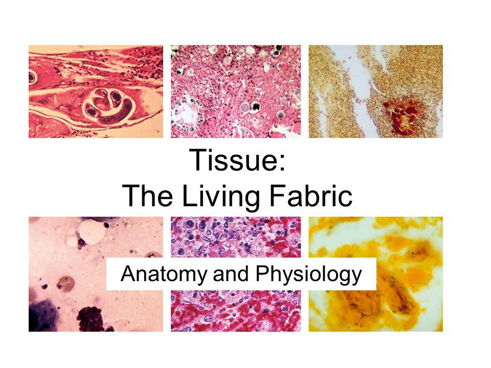 Großzügig Anatomy And Physiology Tissue Slides Ideen - Menschliche ...