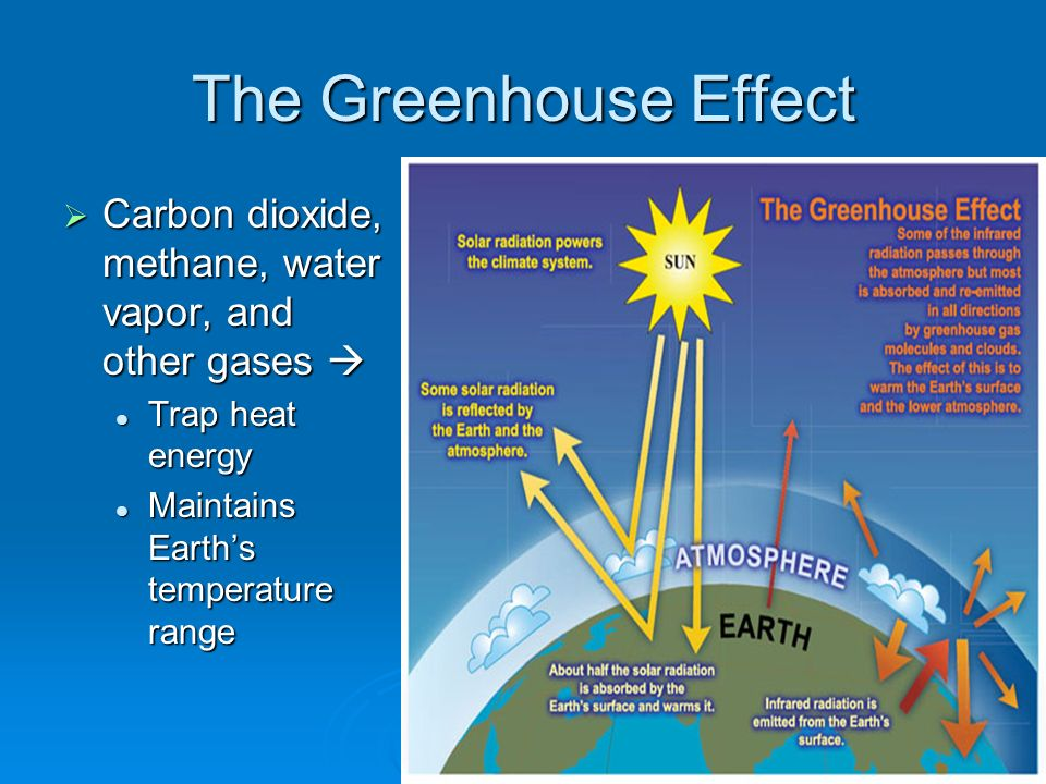Interdependence of living things the biosphere ecosystems 21 the greenhouse effect carbon dioxide methane water vapor and other gases trap heat energy trap heat energy maintains earths temperature range sciox Images