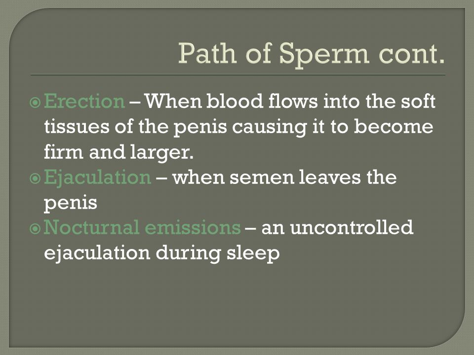 Path of Sperm cont.