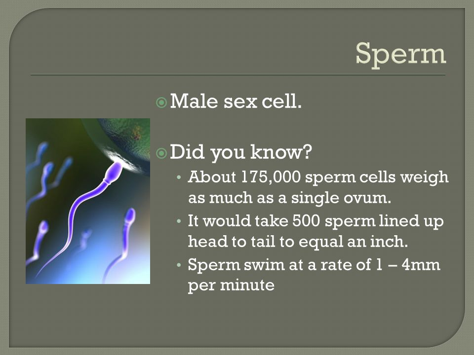 Sperm  Male sex cell.  Did you know. About 175,000 sperm cells weigh as much as a single ovum.