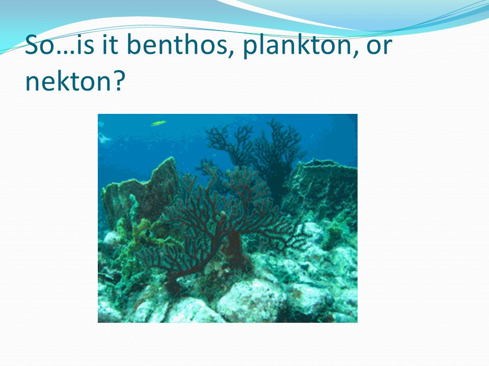 Which of the following organisms could not live on the ocean floor of the oceanic zone.