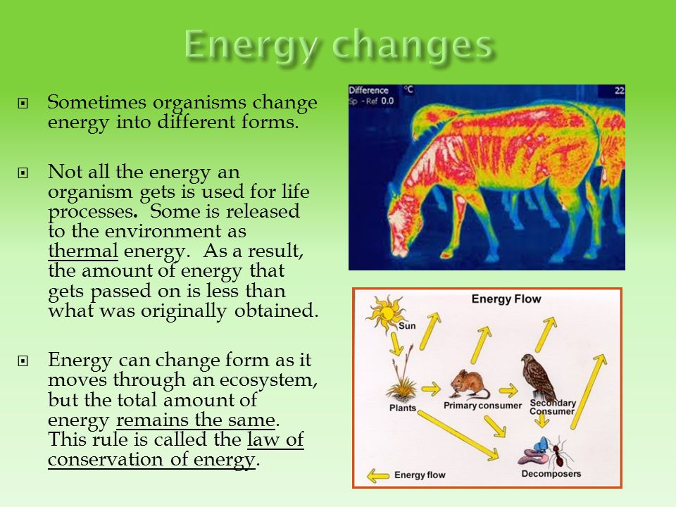 organisms use chemosynthesis Chemosynthesis most life on earth is dependent upon photosynthesis, the process by which plants make energy from sunlight however, at hydrothermal.