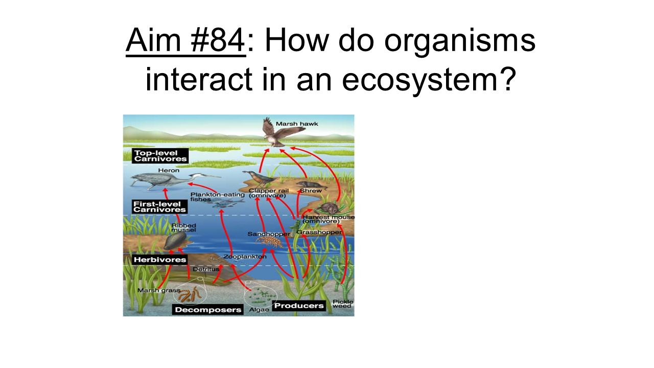 Date: May 17, 2016 Aim #84: How do organisms interact in an ...