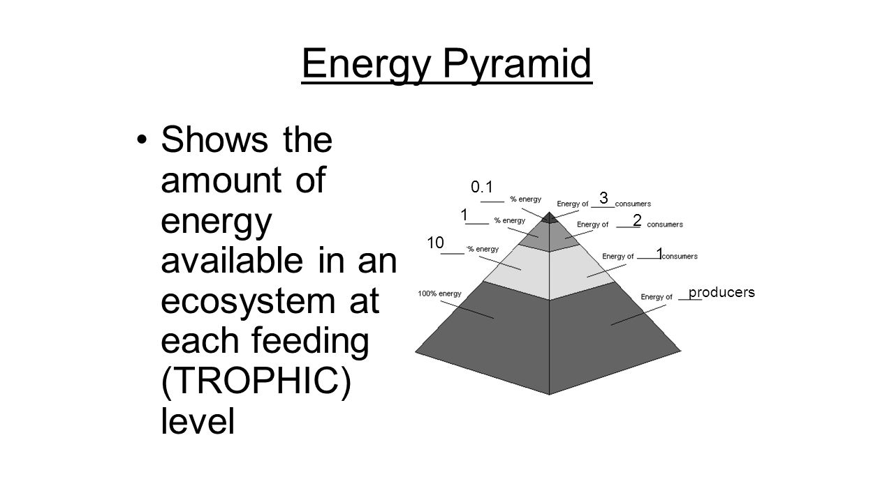 Ecological pyramids worksheet page 25