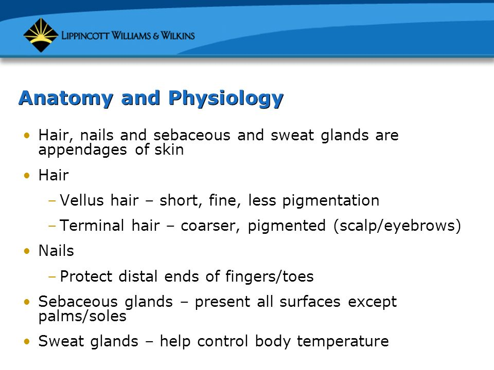 Chapter 5: The Skin, Hair, and Nails. Anatomy and Physiology Major ...