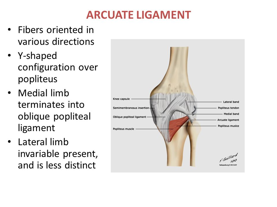 Clinical anatomy of knee joint 6856426 - follow4more.info