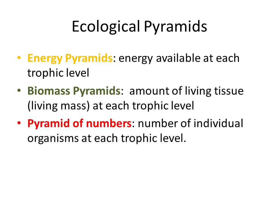 Ecological pyramids worksheet answers