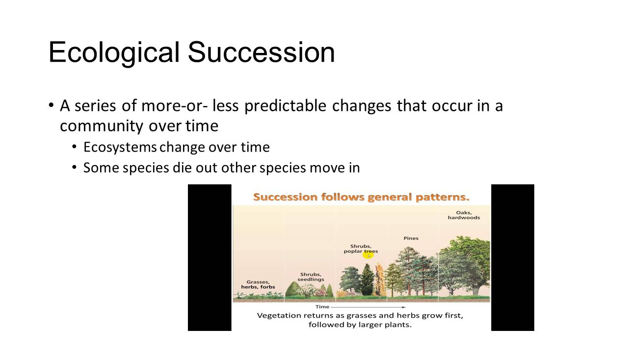 Ecological succession scenarios worksheet answers fort worth independent school district