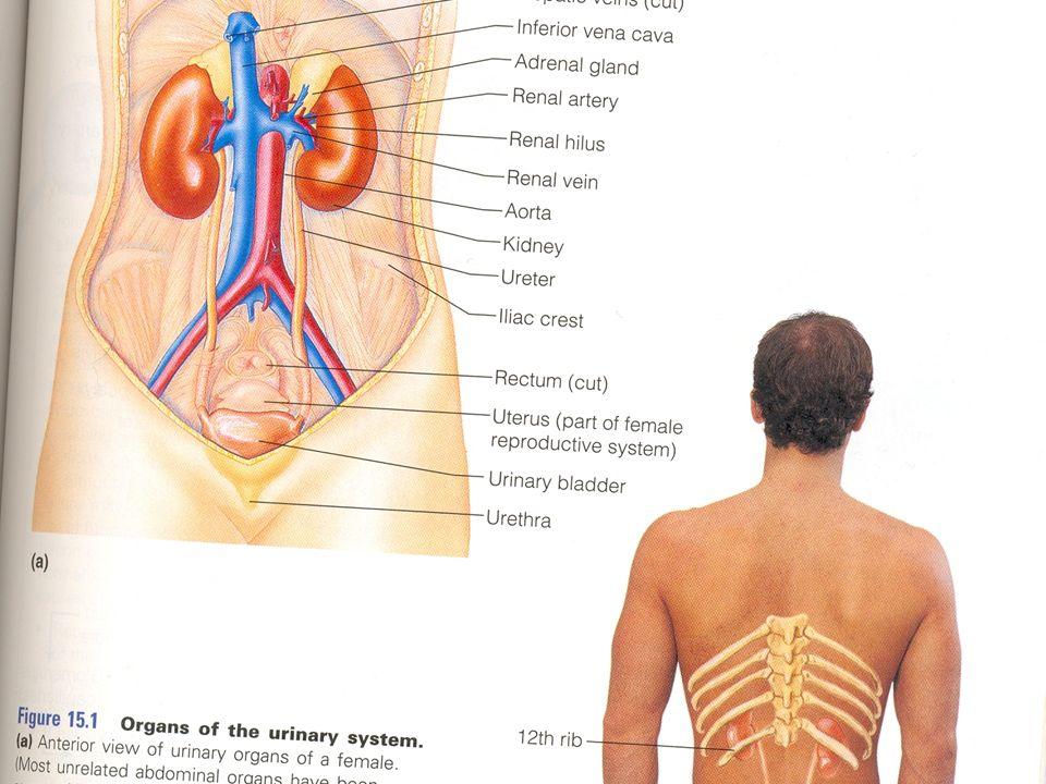 Großzügig Anatomie Der Pfortader System Fotos - Anatomie Ideen ...