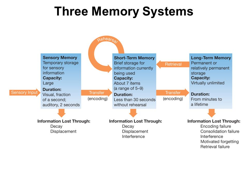 a short review of the human memory and its processes Short-term memory introduction to memory a proposed system and its control processesin: oh bower (ed) human memory: basic processes.