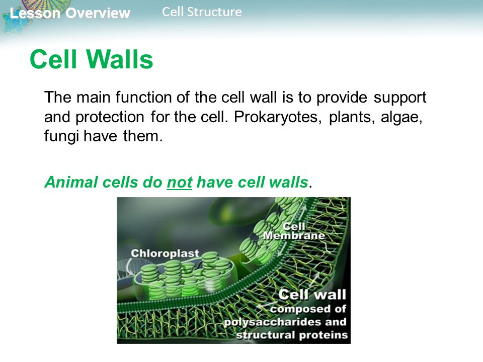 the functions of the main cell