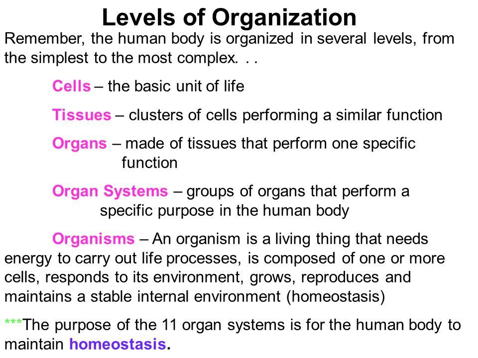 life processes organismal level