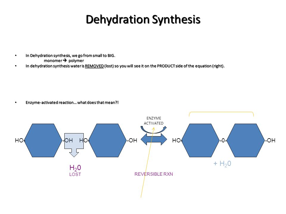 dehydration synthesis definition How hydrolysis can break down polysaccharides (carbohydrates) like starch, cellulose, chitin and glycogen - in the video on dehydration synthesis.